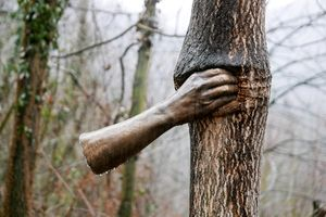 Giuseppe Penone: A Tree in the Wood