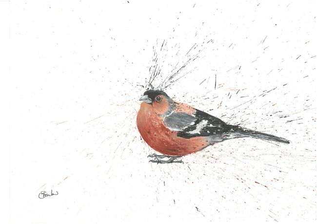 Chaffinch, Clare Brownlow