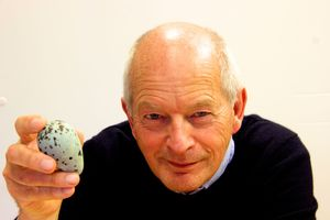 Portrait of Tim Birkhead holding a guillemot's egg. Photograph: J. E. Thompson