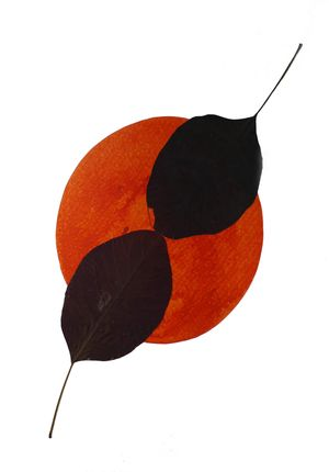 Image: leaves and acrylic on paper, 30cmx21cm