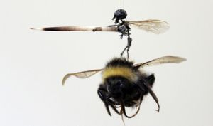 Honeyscribe: Bees and the Art of Pollination