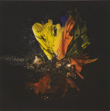 Mat Collishaw Insecticide 13 from Insecticide 13-18 Published by Paupers Press, London, 2010 Suite of six photogravure etchings Edition of 35 Image Size: 70x70cm