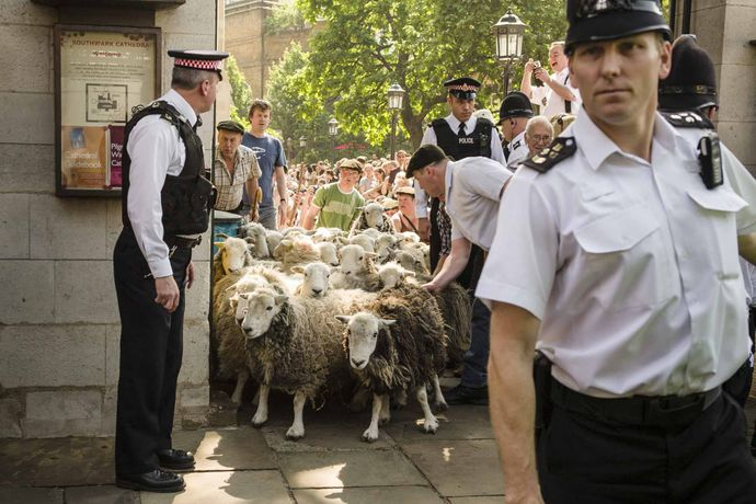 Sheep Drive, Southwark Cathedral, London