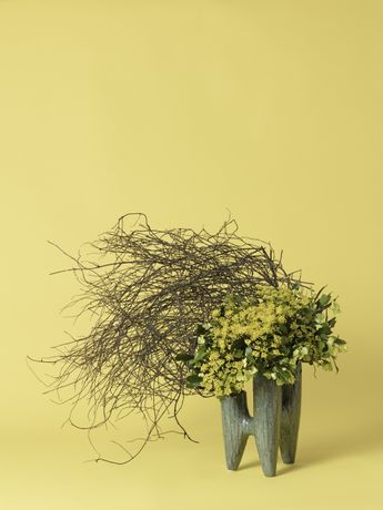 Ann Shelton, The Hysteric, Fennel (Foeniculum sp.), 2015-ongoing