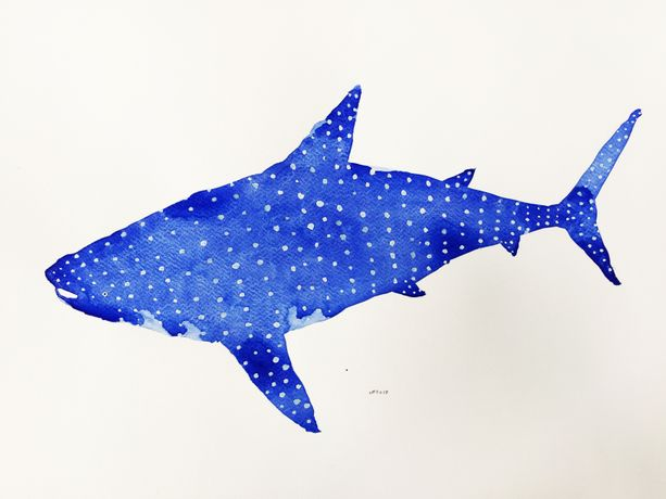 Whale Shark, watercolour on paper