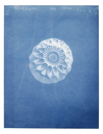 Jessie Brennan, Ashtray, cyanotype, part of the series Inside The Green Backyard (Opportunity Area), 2016