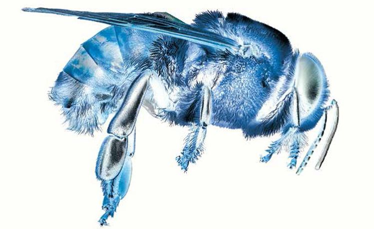 John Burnside: Bee Myths: Image 0