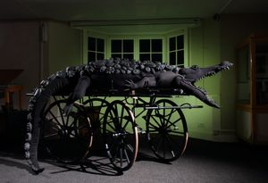 Dorcas Casey, Crocodile installed in Bruton Museum, 2017