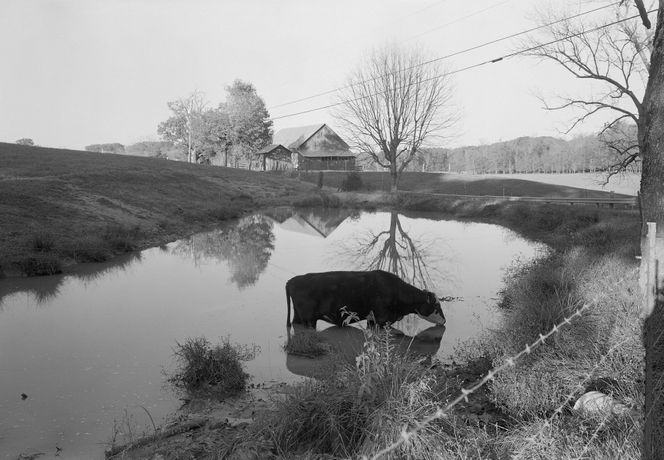 Washington County, Tennessee; Mark Steinmetz