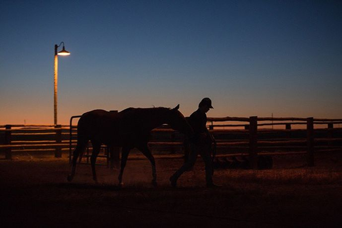 Lean on Pete: Image 0