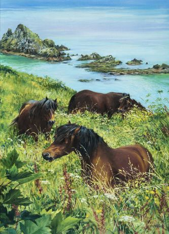 Dartmoor Ponies, Froward Point