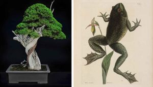 Lifelines/Timelines: Exploring The Huntington's Collections Through Bonsai