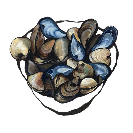 Mussels and Clams by Lucy Routh