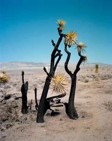 From 'ZZYZX' by Gregory Halpern, published by MACK (2016)