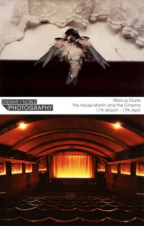 Marcus Doyle: The House Martin and the Cinema: Image 0