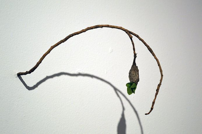 BALAM BARTOLOME  Follow This Artist Bubble, 2005-2015 SCULPTURE Silkworm cocoon, branch and synthetic leaf