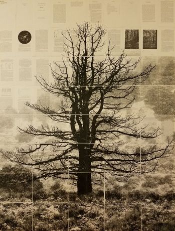 Mike Saijo, Symmetrical Tree