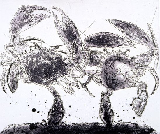 Dancing Crabs, Roger Law