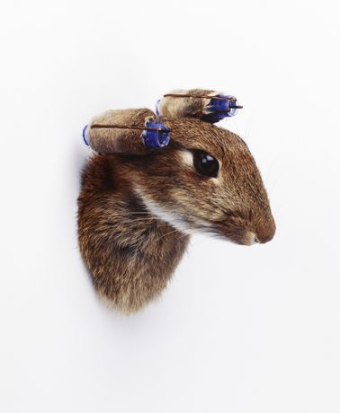 Nancy Fouts, Rabbit with Curlers, 2010, taxidermy rabbit, curlers and kirby grips, 10 × 15 cm (3 78 × 5 78 in.)