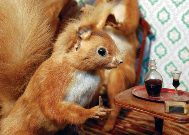 Pat Morris on 'A History of Taxidermy: art, science and bad taste: Image 0