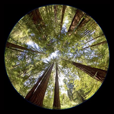 Peter Newman, Redwood Forest, California, 2008  © Peter Newman. Courtesy the artist and CNB Gallery