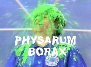 physarum borax | opening Thursday 4 October 7 - 9pm