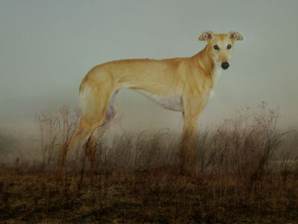 Port Meadow Dogs: Image 0