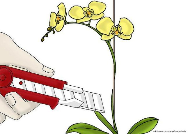 Image Credit: wikiHow, 6 Ways to Care for Orchids