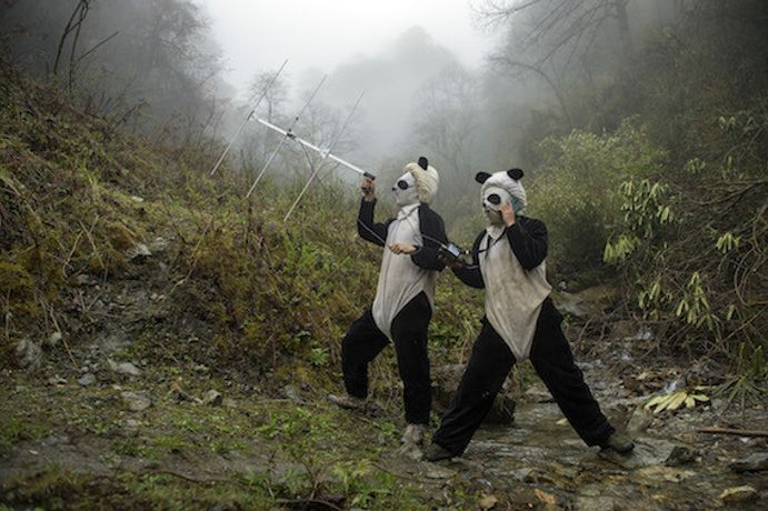 "Ami Vitale, from the series ""Pandas Gone Wild"", 2015 © Ami Vitale"