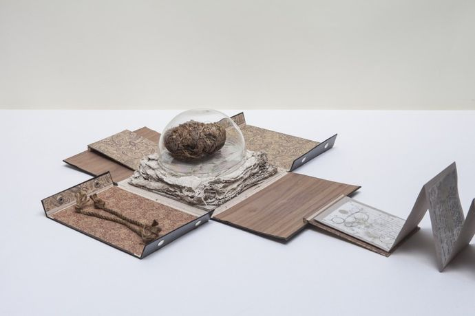 Rose of Jericho, 2013–2014  Mixed media  Dimensions variable