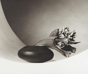 Robert Mapplethorpe 'Selected Photographs'