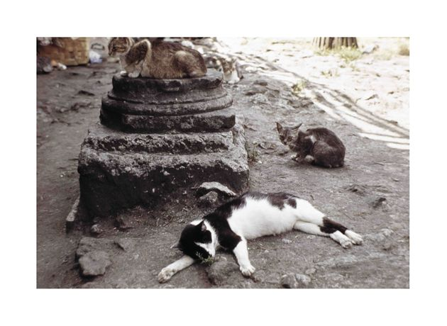 Simone Forti Largo Argentina (AKA Rome Cats), 1968/2012 C-Print 35,5 x 52 cm (framed) Ed. of 5 + 2 AP Courtesy of the artist and Galleria Raffaella Cortese, Milan