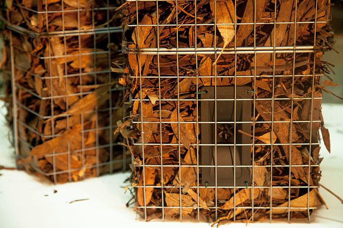 Leaves soundcages is an installation presented by Atilio Doreste