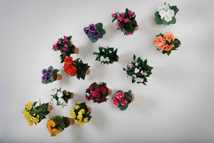 Hans-Perter Feldmann, Flower Pots, 2009 © Hans-Peter Feldmann; Courtesy: of the artist and Mehdi Chouakri, Berlin