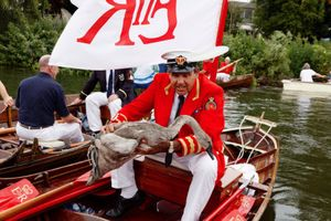 Royal Swan Marker, David Barber Swan Upping on the Thames