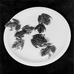Robert Mapplethorpe, Frogs, 1984, Silver Gelatin Print, 73.3 x 60.1 x 3 cm - 28 7/8 x 23 5/8 x 1 1/8 ins framed - Courtesy Alison Jacques Gallery, London. Copyright Robert Mapplethorpe Foundation, New York. Used by Permission.
