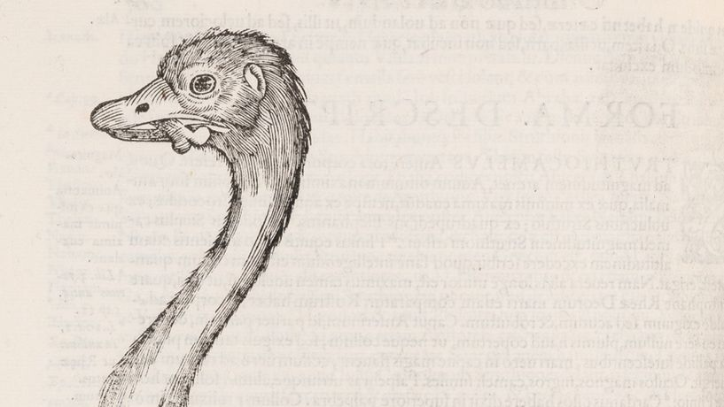 Illustration of an ostrich (c) Royal College of Physicians
