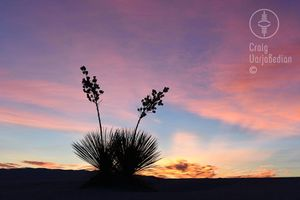 The Great White Sands: The Yuccas, the Dunes and the Stars Photo Workshop