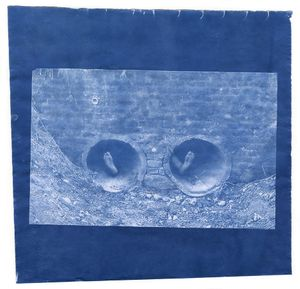 Thomas Mailaender, Prank, 2014. Cyanotype print on paper