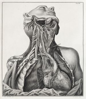 Under the skin: anatomy, art and identity