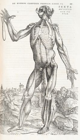 De humani corporis fabrica. Dissection by Andreas Vesalius, illustrations attributed to Jan Stephan van Calcar. Published Basel, 1543. © Royal College of Physicians, photography by Mike Fear.