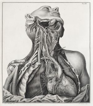 Illustration of the cardiac nerves of the right side in Tabulae neurologicae ad illustrandam historiam anatomicam cardiacorum nervorum. Dissected and drawn by Antonio Scarpa and engraved by Faustino Anderloni. Published Pavia, 1794. © Royal College of Physicians, photography by Mike Fear.