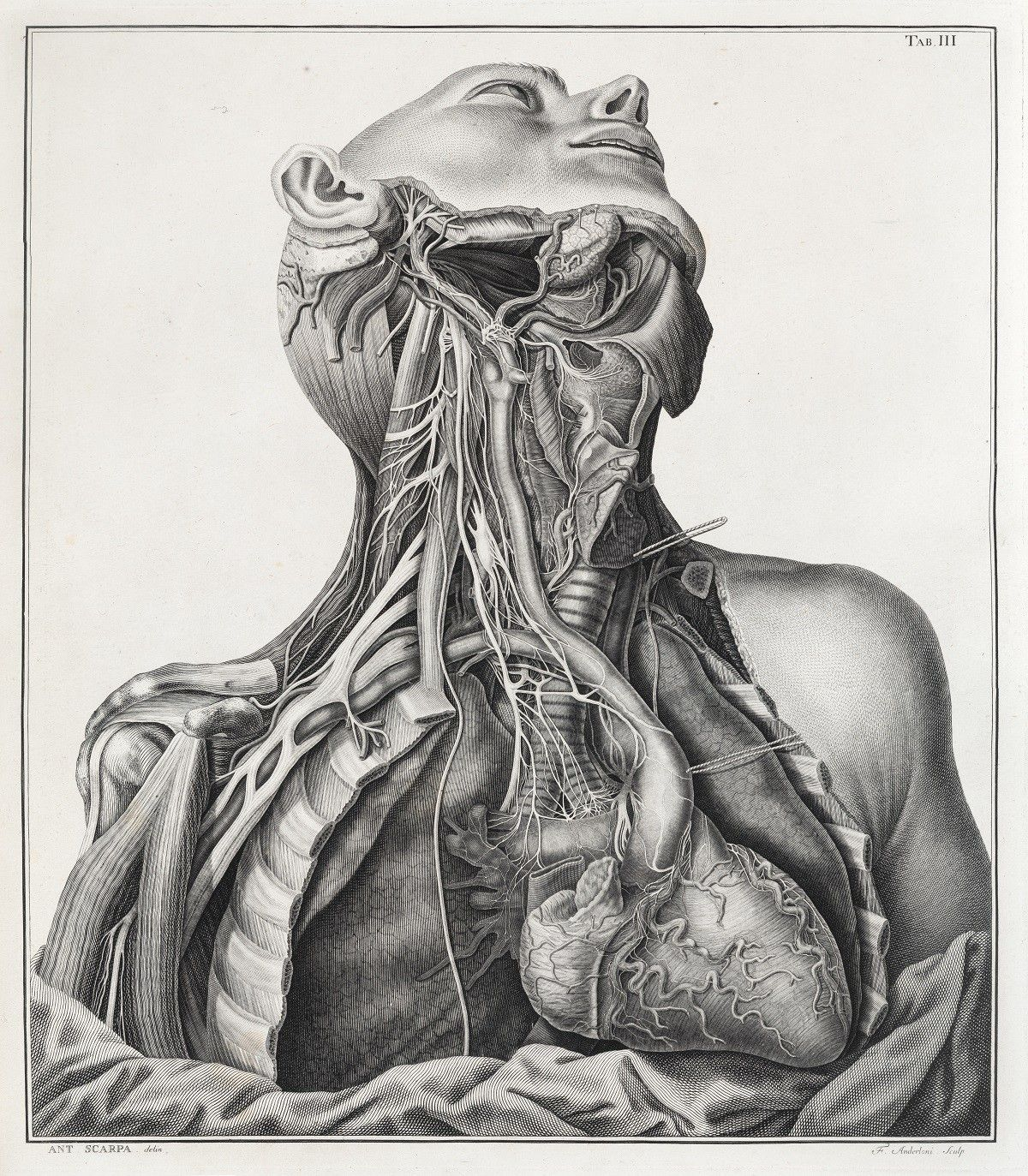 Under The Skin Illustrating The Human Body Exhibition At Royal College Of Physicians Museum In London