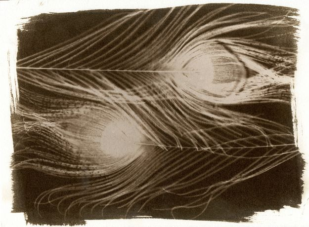Van Dyke Brown, Printing Workshop: Image 0