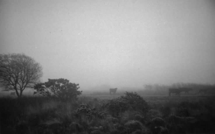 Richard Billingham, (Untitled) Welshmoor, 2010, Black and white photograph