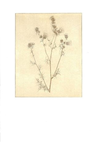 Weeds -- Undervalued Plants of Jaywick by Hannah Stageman: Image 0