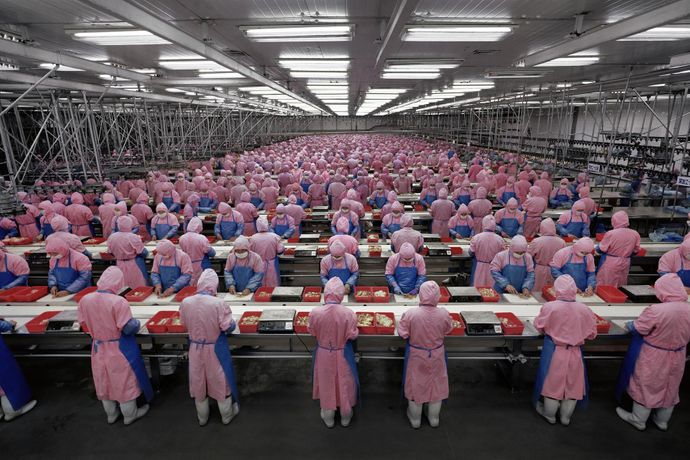 Edward Burtynsky Manufacturing #17, Deda Chicken Processing Plant, Dehui City, Jilin Province, China, 2005, Chromogenic Colour Print